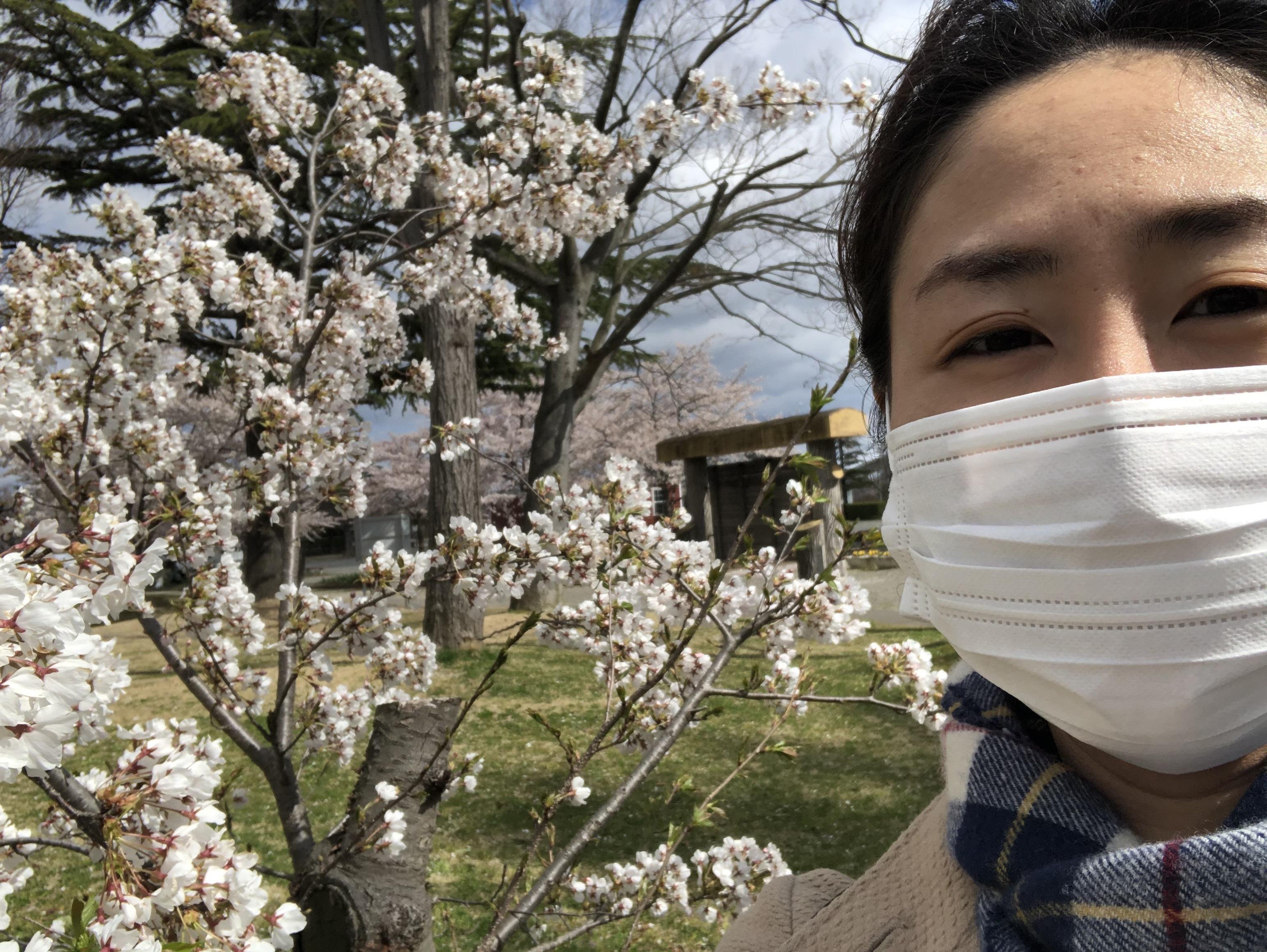 桜と人の顔の写真